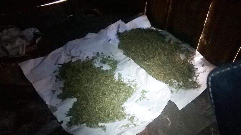 Марихуана рубцовск настой на марихуане
